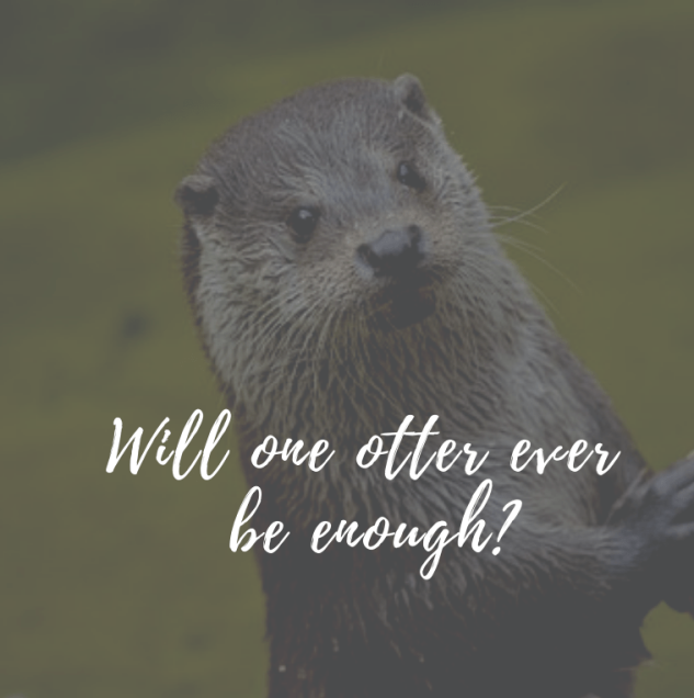 will-one-otter-ever-be-enough_.png